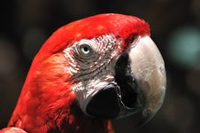 Free Face And Eye Feature Of A Macaw Royalty Free Stock Images - 20647979