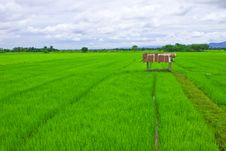Free Small Shelter And Rice Field Stock Images - 20648194