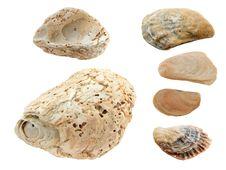Free Black Sea Shells Royalty Free Stock Photos - 20649678