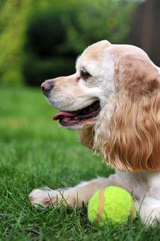 Free Dog Sitting On Grass Stock Image - 20649831