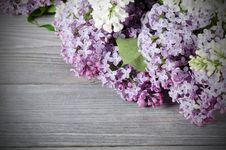 Free Beautiful Lilac Royalty Free Stock Photography - 20649867