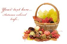 Free Autumn Leaves And Fruits Isolated Royalty Free Stock Photos - 20649888