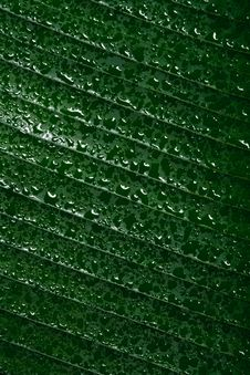 Free Drops Of Water On Tropical Leaf Royalty Free Stock Photography - 20650067