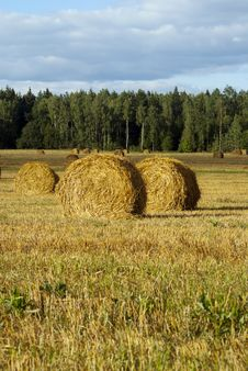 Free Haystack Royalty Free Stock Image - 20650246