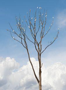 Free Tree On White Background Stock Photography - 20651042