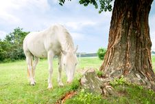 Free Horse Royalty Free Stock Photo - 20651085