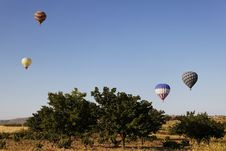 Free Balloons In The Trees Blue Sky Royalty Free Stock Photos - 20651468