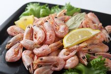 Free Coldwater Shrimps Stock Photography - 20651722