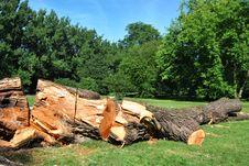 Sawn Tree Stock Photography