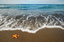 Free Starfish Stock Photo - 20653190