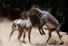 Free Zebra Fighting Stock Image - 20653201