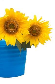 Free Sunflowers Stock Images - 20653294