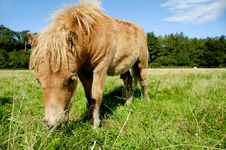 Free Foal Is Eating Grass Royalty Free Stock Photo - 20654215