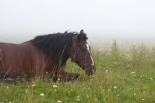 Free Horse In The Fog Royalty Free Stock Photo - 20656585
