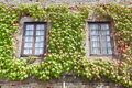 Free Ivy On The Windows Royalty Free Stock Photo - 20662565