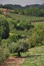 Free Arilje In Serbia Stock Photography - 20666402