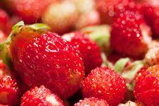 Free Strawberries Royalty Free Stock Photo - 20660305