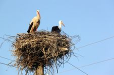 Free Storks Royalty Free Stock Photo - 20664585