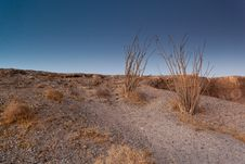 Free Desert Trees On Badlands Stock Photo - 20665620