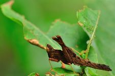 Free Grasshopper In Deep Forest Royalty Free Stock Photos - 20666728