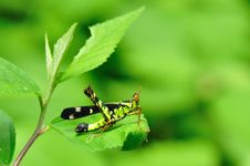 Free Grasshopper In Deep Forest Royalty Free Stock Photography - 20666747