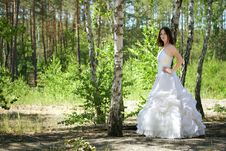Free Bride With Dark-brown Hair Posing Royalty Free Stock Photo - 20667635