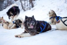 Free Dogs Royalty Free Stock Image - 20667666