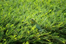 Free Lizard On Leaves Stock Photos - 20668013