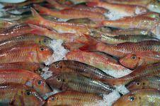Free Fish Stock Photos - 20670353