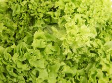Free Lettuce Stock Images - 20670454