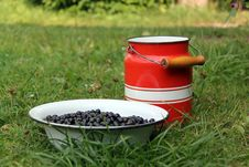 Free Blackcurrant Stock Photography - 20671362