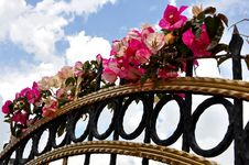 Free Fuchsia Flowers On Fence Royalty Free Stock Photography - 20672347