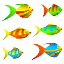 Free Colorful Fish. Royalty Free Stock Images - 20672599