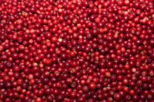 Free Red Bilberries. Stock Images - 20672864