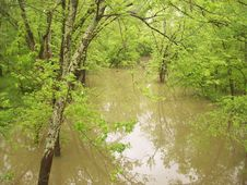 Flooded Creek Stock Photography