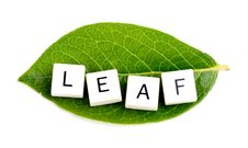 Free Leaf Stock Photography - 20674112