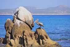 Free Lonely Pelican On The Rocks Stock Photos - 20674783
