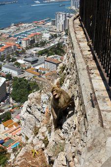 Free Ape At Giblartar Royalty Free Stock Photography - 20674997