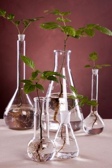 Free Ecologic Laboratory Royalty Free Stock Image - 20675726