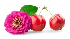 Chrysanthemum And Mini Apples Stock Images
