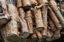 Free Dry Pine Firewood Royalty Free Stock Photo - 20678995