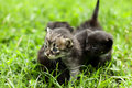 Free Little Kitty Royalty Free Stock Photography - 20687347