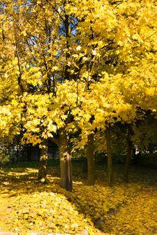 Free Autumn Season Stock Photos - 20680143