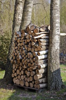 Free Pile Of Firewood Stock Photo - 20681330