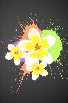 Free Beautiful Flowers Stock Photo - 20681480