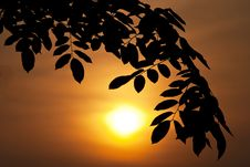 Free Silhouette Leaf Royalty Free Stock Image - 20682006