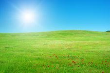 Free Beautiful Green Meadow. Royalty Free Stock Images - 20682909