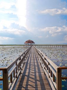 Free Bridge In The Swamp Lotus. Stock Photo - 20685830