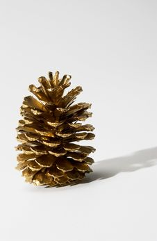 Free Pine Cone Royalty Free Stock Photos - 20685928
