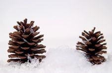 Free Pine Cones In Snow Royalty Free Stock Photography - 20687427